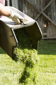 Dumping Grass Clippings — Stock Photo
