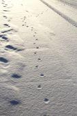 Tracks in Snow — Stock Photo