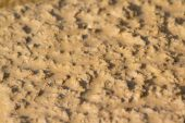 Dry mud for natural background — Stock Photo