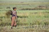 Tharu woman working in crop in Nepal — Stock Photo
