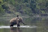 Domestic elephant with mahout in Bardia, Nepal — Stock Photo