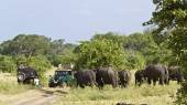 Game drive  in Minneriya national park, Sri Lanka — Stock Photo