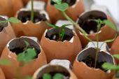 Environmentally friendly plant pots — Stock Photo