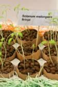 Eggshells used to grow plants — Stock Photo