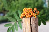 Brush ripe rowan on a stump. — Stock Photo