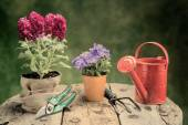 Flowers and garden tools on wood table warm filter applied — Stock Photo