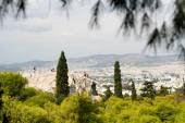 Coniferous trees and urban landscape of Athens — Stock Photo