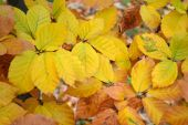 Beautiful leaves in autumn — Stock Photo