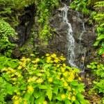 Beautiful alpine landscape with fresh water stream — Stock Photo #55319725