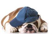 Dog wearing baseball cap — Stock Photo