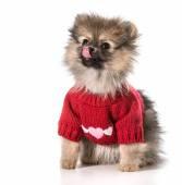 Puppy love — Stockfoto