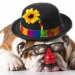 Silly dog — Stock Photo #61361023