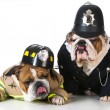 Dog firefighter on policeman — Stock Photo #61361685