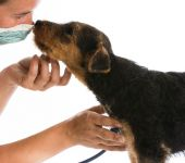 Veterinary care — Stock Photo