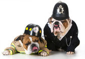 Dog firefighter on policeman — Stock Photo