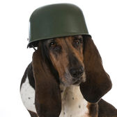 Canine soldier — Stock Photo
