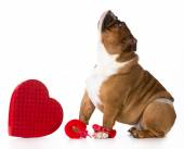 Valentines day dog — Stock Photo