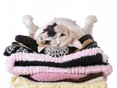 Spoiled dog laying on a pile — Stock Photo