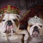 Royal couple — Stock Photo #66999985