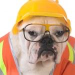 Working dog — Stock Photo #69966173