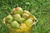 Pail with pears — Stock Photo