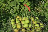 Pears in basket on grass — Stock Photo