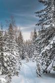 Winter snowy forest under the blue sky — Foto de Stock