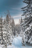 Winter snowy forest under the blue sky — Stock Photo