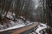 Turning the winter road in the woods — Stock Photo