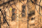 Raindrops on the branches without leaves in autumn — Zdjęcie stockowe