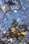 里加在秋天的水洼反射圆顶大教堂 — 图库照片