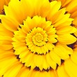 Sunflower infinity spiral abstract background. — Stock Photo #53133853