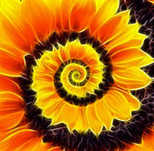 Sunflower infinity spiral abstract background.  — Foto de Stock