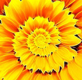 Sunflower infinity spiral abstract background.  — Stock Photo