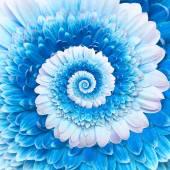 Gerber flower infinity spiral abstract background — Foto de Stock