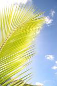 Sunlight shining though a palm tree leave against a blue sky — Stock Photo