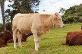 Queensland cattle ranch — Fotografia Stock