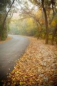Yola düşen yapraklarla kaplı — Stok fotoğraf