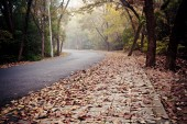 Road covered with fallen leaves — 图库照片