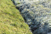 Frost and defrost grass — Stock Photo