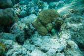Beautiful coral reef — Stock Photo