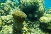 Beautiful soft coral — Stock Photo