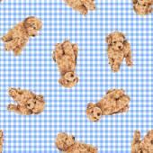 Wzór psa — Zdjęcie stockowe