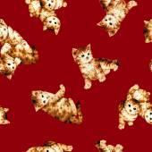 Pattern of cat — Photo