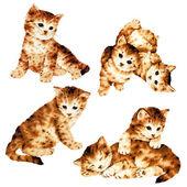 Ilustración de gato — Stockfoto