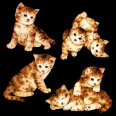 Illustration of  cat — Foto de Stock
