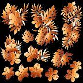 Illustration of Hibiscus — Stock Vector