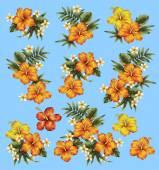 Hibiscus bloem illustratie — Stockfoto