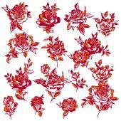 Ilustración de la flor color de rosa, — Vector de stock