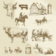 Farm, cow, agriculture - hand drawn collection — Stock Vector #52595237